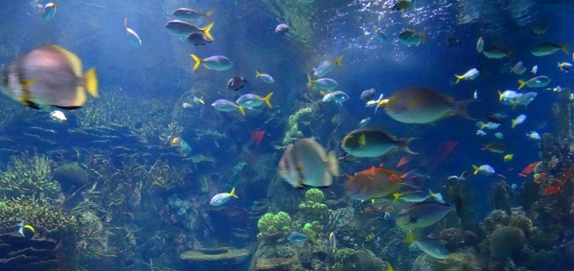 The Biggest Aquarium Of Europe Valencia Spain The World Is My